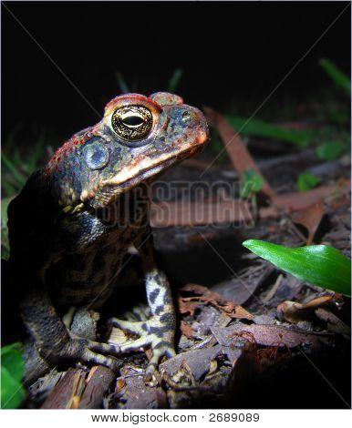 Frog In Dark