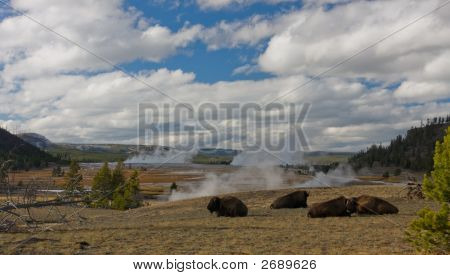 Firehole River Panorama With Bison, Yellowstone National Park, Wyoming