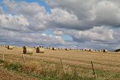 Freshly Harvested Round Hay Bales In A Field In Summertime poster