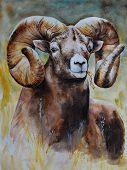 A Brown Large Male Ram With Steep Large Horns Looks Straight Ahead. Realistic Watercolor Painting. B poster