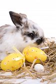 foto of easter bunnies  - Cute little easter bunny with easter eggs - JPG