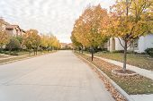 Stunning Yellow Fall Foliage Color At New Residential Neighborhood In Suburban Dallas, Texas poster