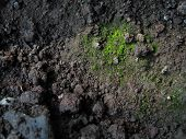 picture of villi  - green bryophytes and soil close up shoot background - JPG