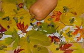 Leaves Of Fallen Trees In The Forest   Fallen Autumn Leaves poster