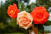 Fresh Tender Pink And Red Garden Roses Stand On Wooden Porch In Glass On The Background Of A Country poster