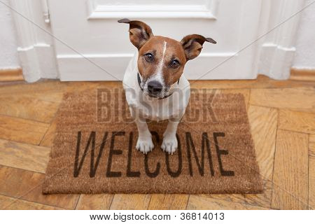 Hond Welcome Home