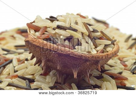 Akvatika color mix rice