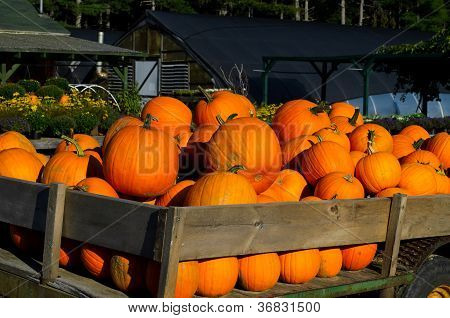 Pumpkins on trailer