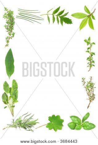Culinary And Medicinal Herbs