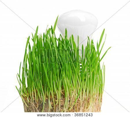 light bulb on grass symbolizing green energy