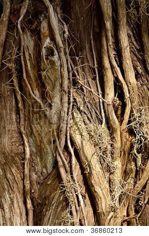 Twisted vines