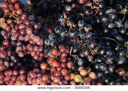 Red And Black Grapes