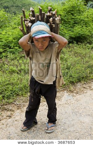 Child Transports Firewood, Laos