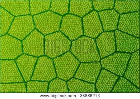 Leaf Under Microscope