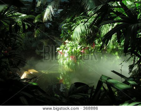 Mock Rainforest