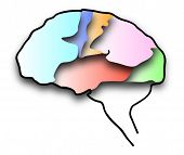 Image of human brain color.