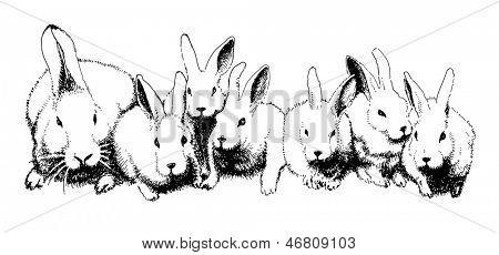 Vector hand drawn family of rabbits