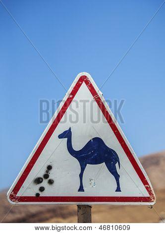 Beware Camels