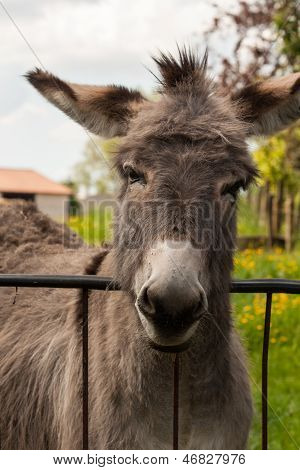 Funny Mule In A Field On A Sunny Day