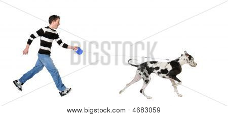 Man Walking His Dog (great Dane 4 Years)