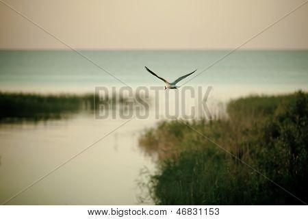 Lone Seagull