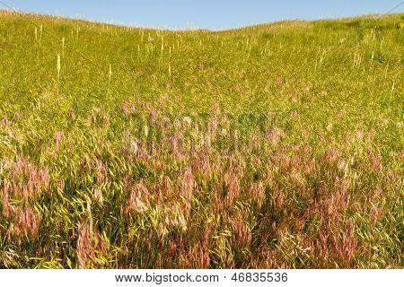 grasbewachsenen Hügel, Kansas Weide