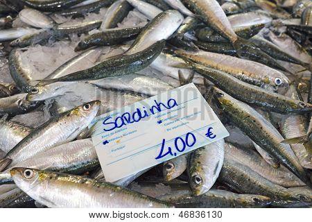 Fresh sardines in the fishmarket
