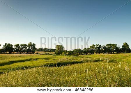 green Kansas pasture
