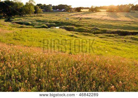Kansas pasture at sunset, horses grazing