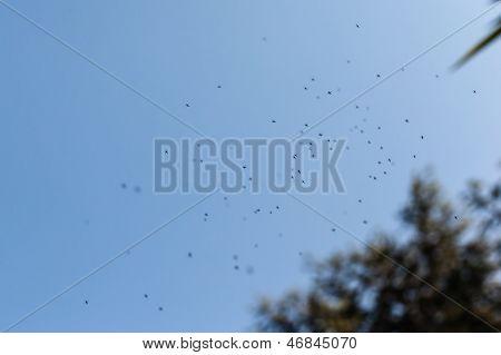Enjambre de mosquitos