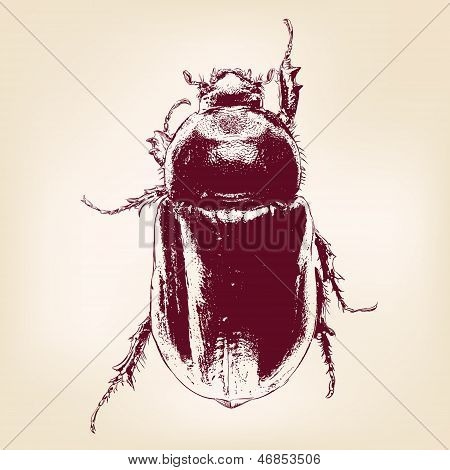 beetle scarab hand drawn vector llustration