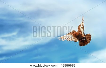 Pigeon Flying Blue Sky Freedom Background