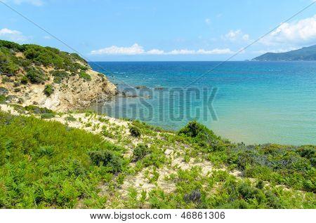 Wild Grassy Beach