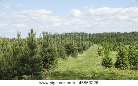 tree farm in the country