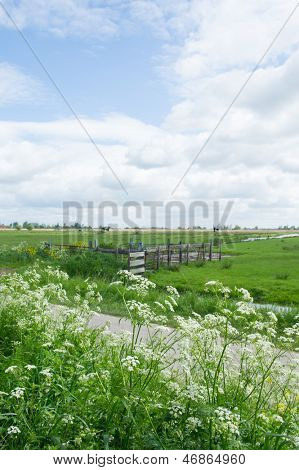 Cow parsley in front of Dutch landscape with meadows