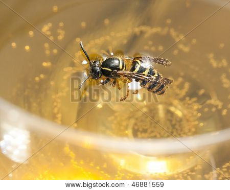 Drown Bee Or Wasp In A Wine
