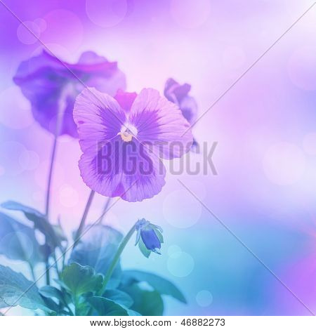 Beautiful purple pansies flowers isolated on blue blurred background, floral border, gentle hearts-ease, blooming nature, summer time season