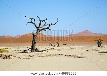 Deadvlei - camel thorn trees and dunes