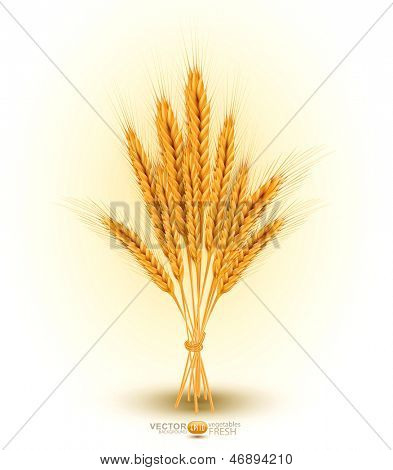 vector background with a sheaf of golden wheat ears