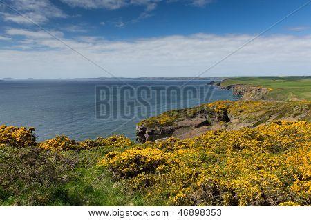 Haroldstone Chins do galês Costa caminho perto amplo Haven, St Bride Bay Pembrokeshire