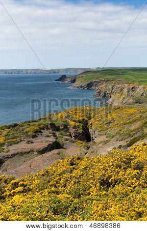 Haroldstone Chins de Gales Costa caminho perto amplo Haven, Druidstone Haven e Bay St Bride