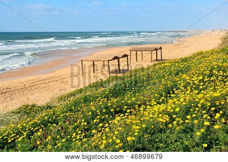 Yellow flowers and sandy beach along Mediterranean sea in Ashqelon, Israel.