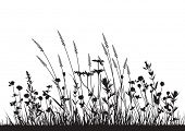 image of grassland  - vector wild herbs and flowers silhouette background - JPG