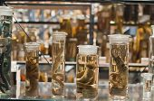 foto of embalming  - Fish specimens kept in jars along with ethanol to preserve them