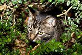pic of catnip  - cute cat has fun in the garden in autumn colors - JPG