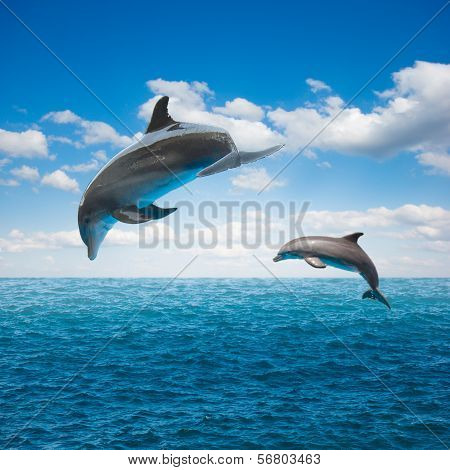 couple of jumping dolphins