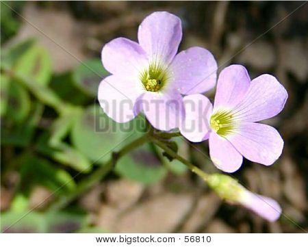 Flower - 125