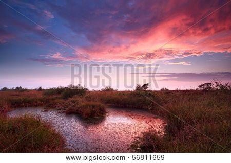 Purple Sky During Sunrise Over Bog