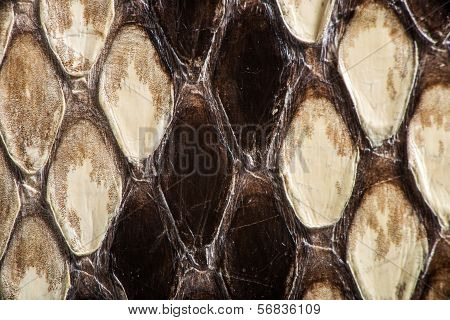 Texture Of Genuine Snakeskin