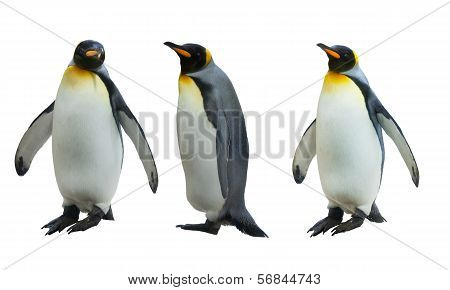 Three imperial penguins